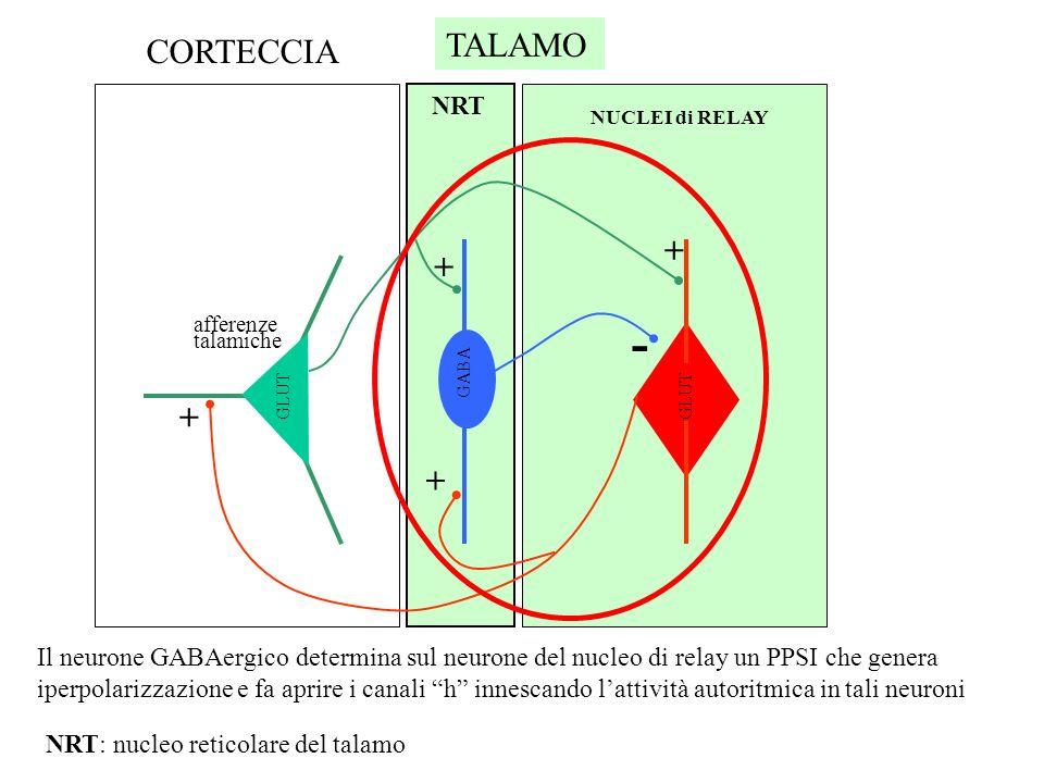 - TALAMO CORTECCIA + NRT