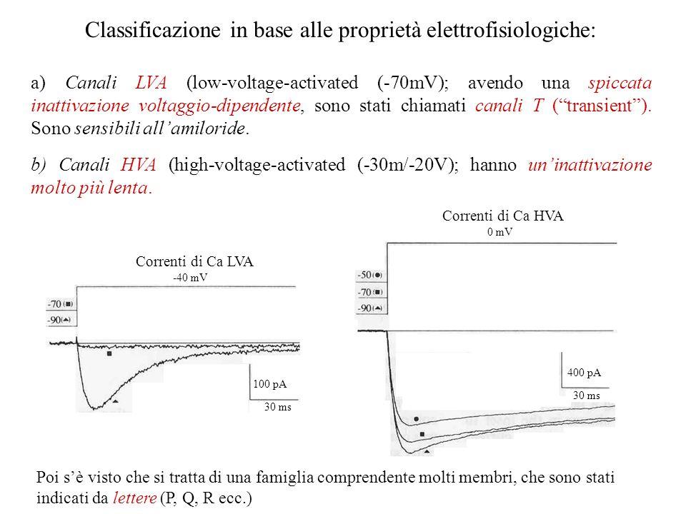 Classificazione in base alle proprietà elettrofisiologiche:
