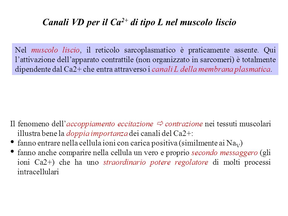 Canali VD per il Ca2+ di tipo L nel muscolo liscio