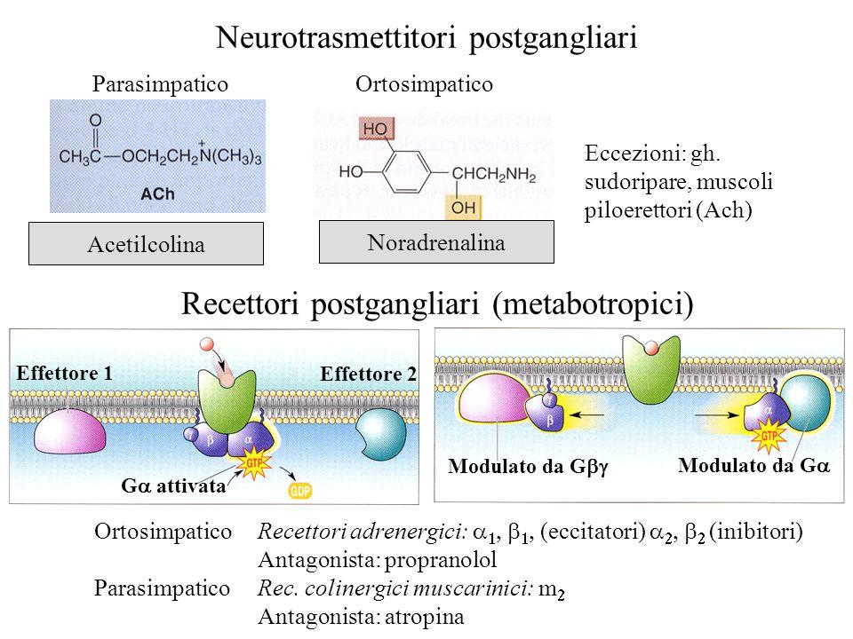Neurotrasmettitori postgangliari