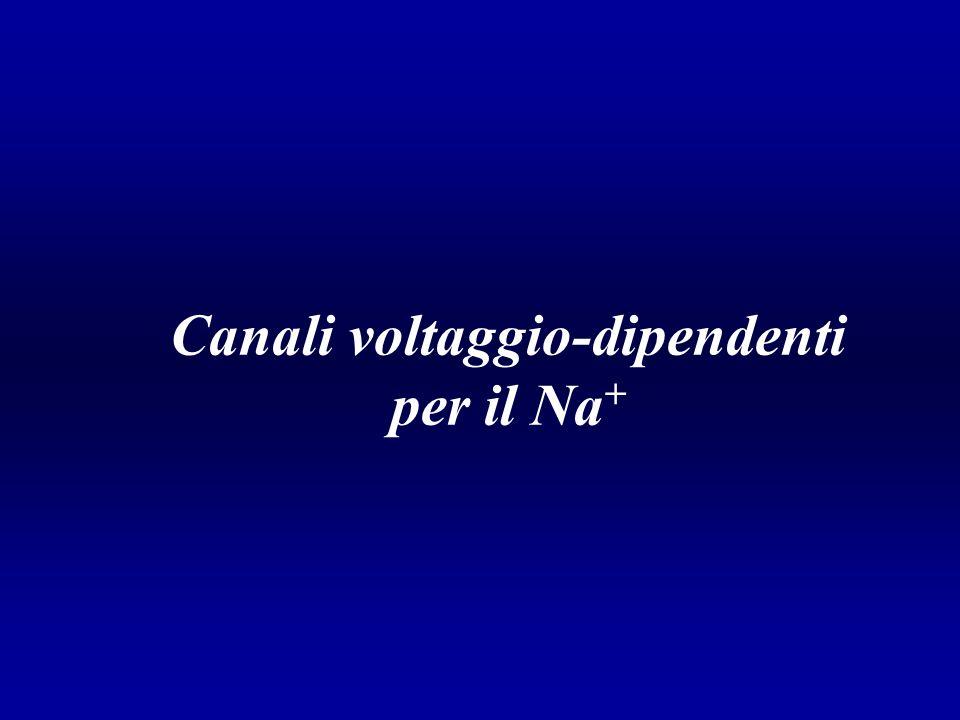 Canali voltaggio-dipendenti per il Na+