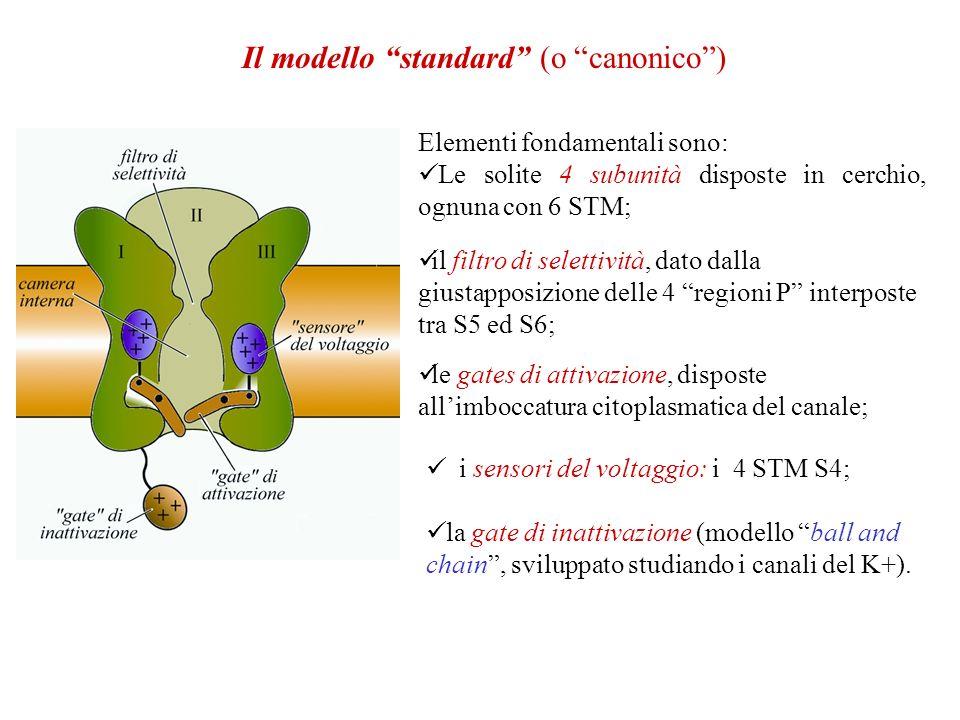 Il modello standard (o canonico )