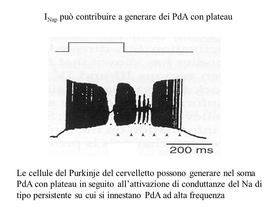 INap può contribuire a generare dei PdA con plateau