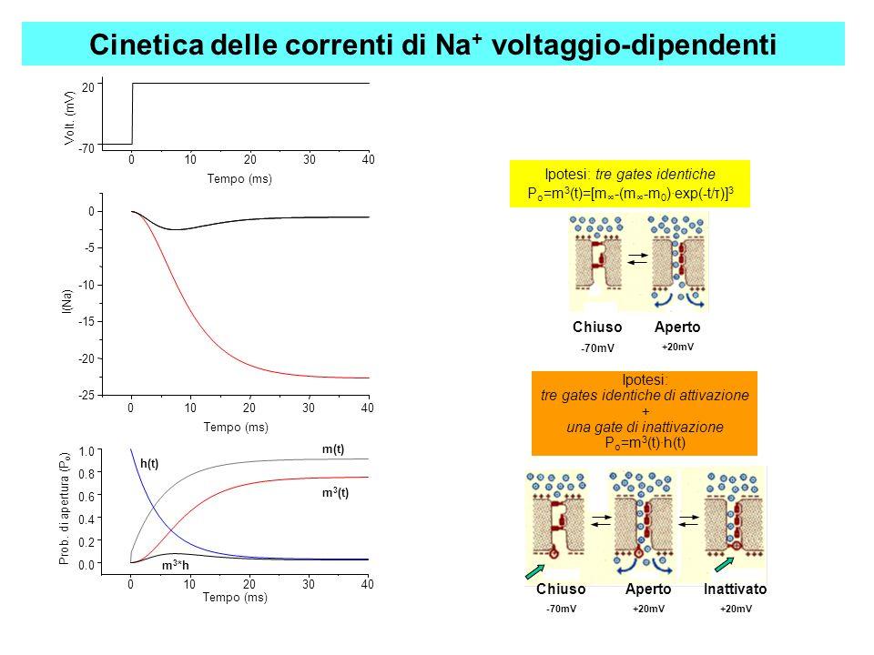 Cinetica delle correnti di Na+ voltaggio-dipendenti