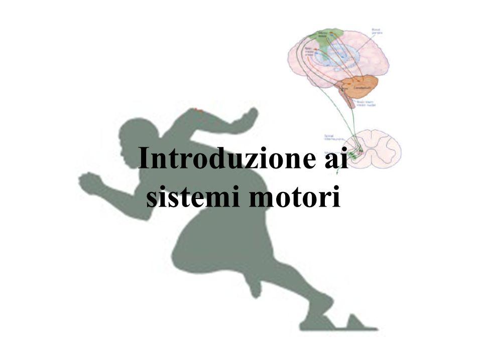 Introduzione ai sistemi motori