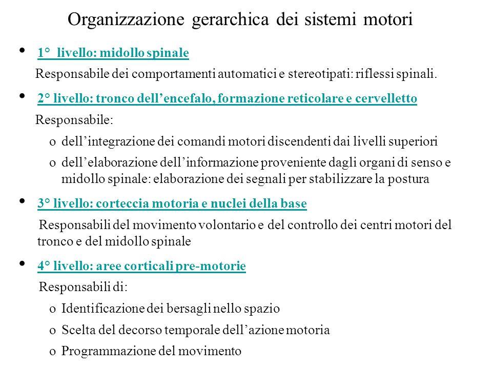 Organizzazione gerarchica dei sistemi motori