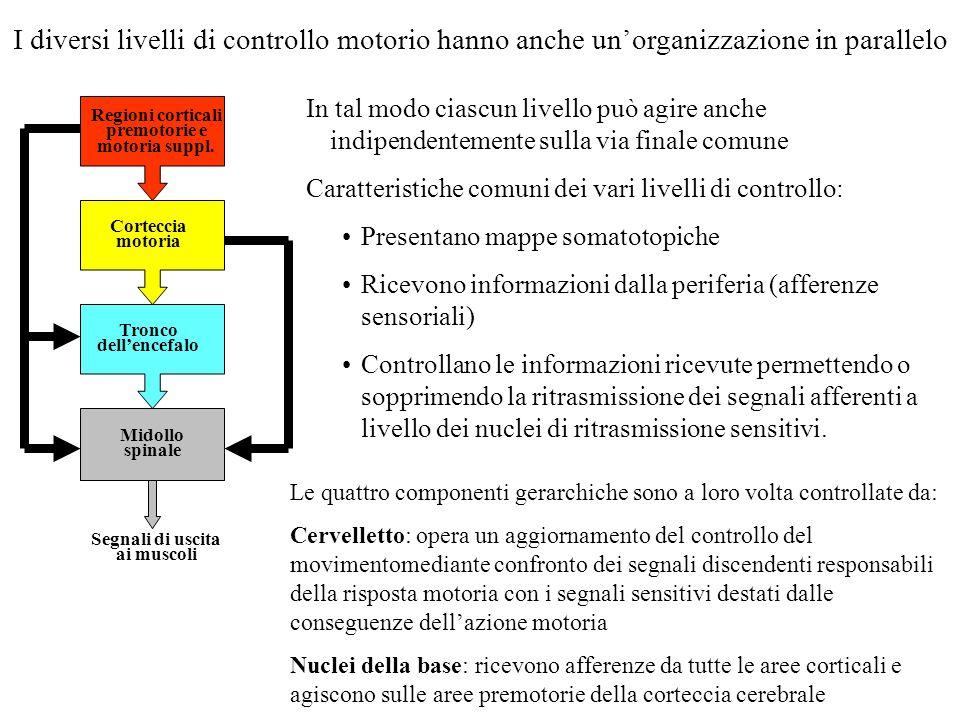 I diversi livelli di controllo motorio hanno anche un'organizzazione in parallelo