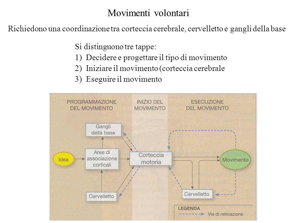 Movimenti volontari Richiedono una coordinazione tra corteccia cerebrale, cervelletto e gangli della base.