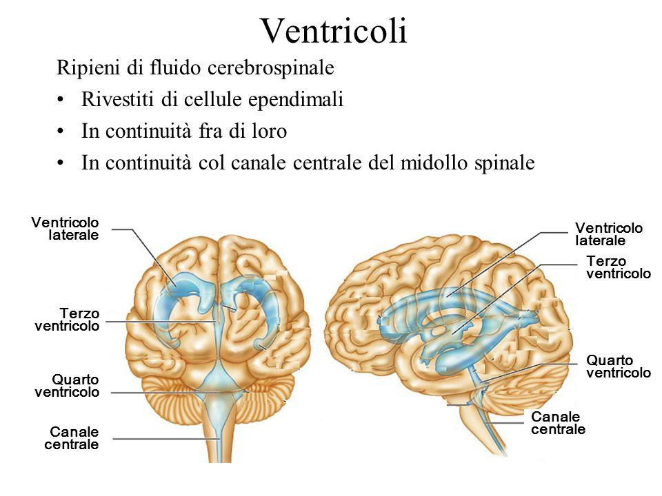 Ventricoli Ripieni di fluido cerebrospinale