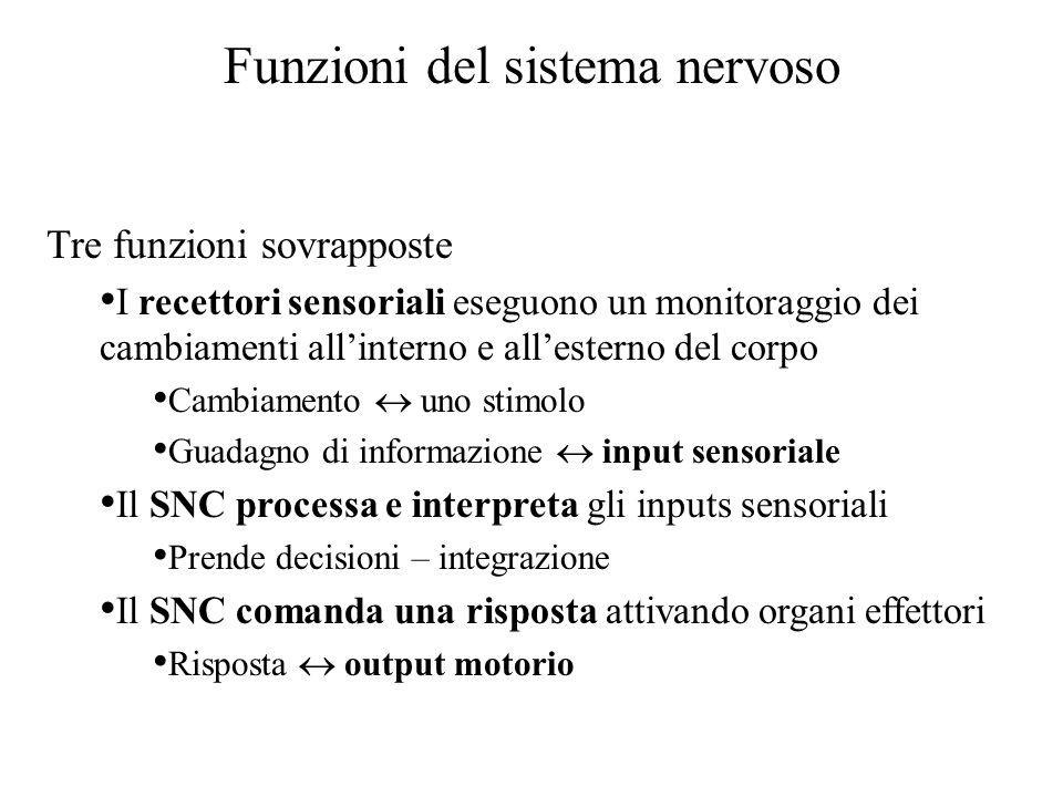 Funzioni del sistema nervoso