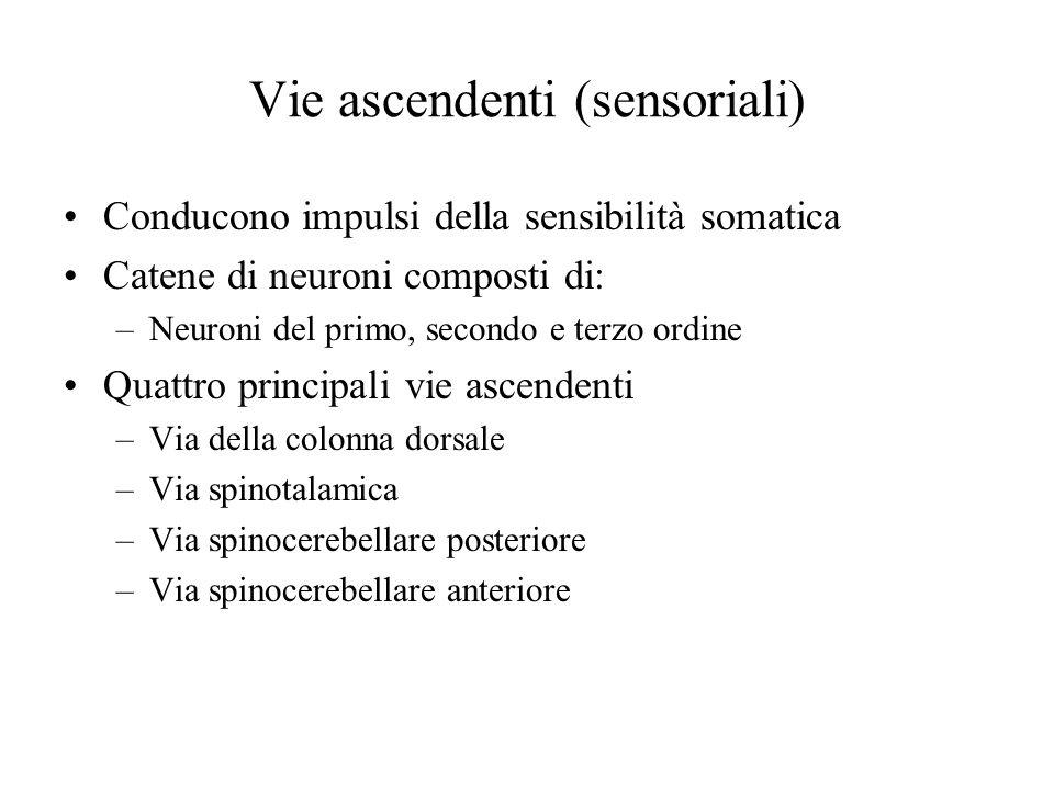 Vie ascendenti (sensoriali)