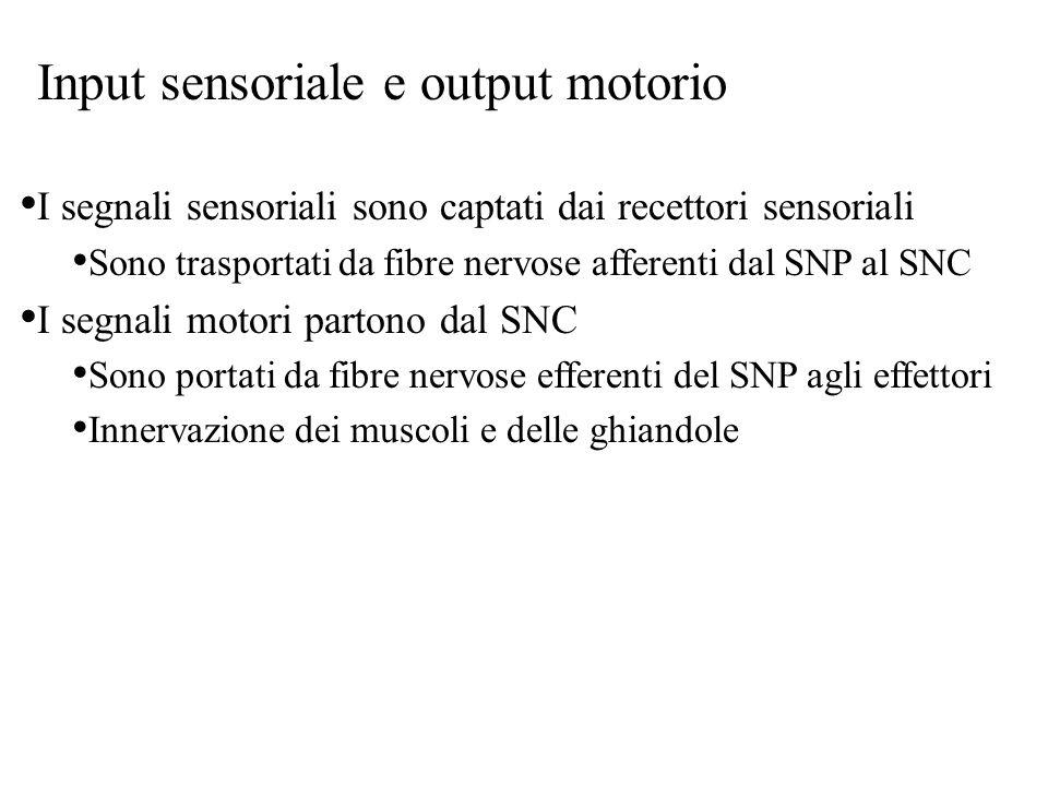 Input sensoriale e output motorio