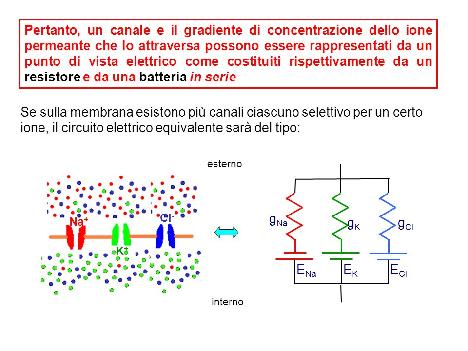 Pertanto, un canale e il gradiente di concentrazione dello ione permeante che lo attraversa possono essere rappresentati da un punto di vista elettrico come costituiti rispettivamente da un resistore e da una batteria in serie