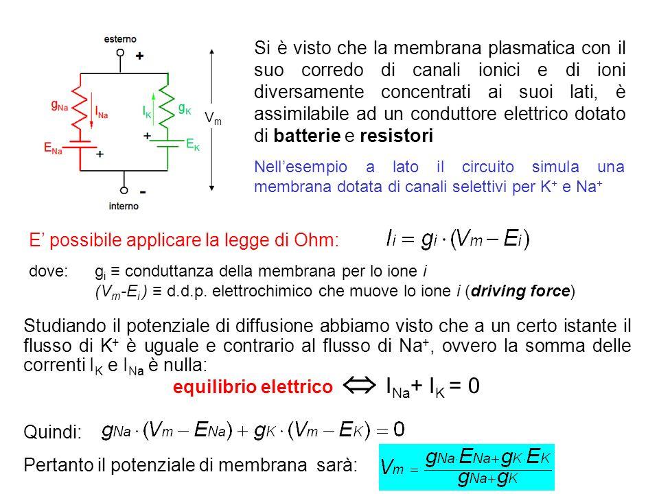 equilibrio elettrico  INa+ IK = 0