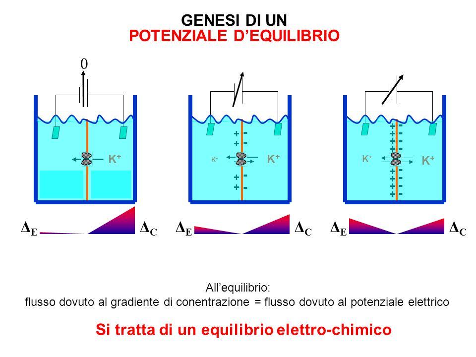 POTENZIALE D'EQUILIBRIO Si tratta di un equilibrio elettro-chimico