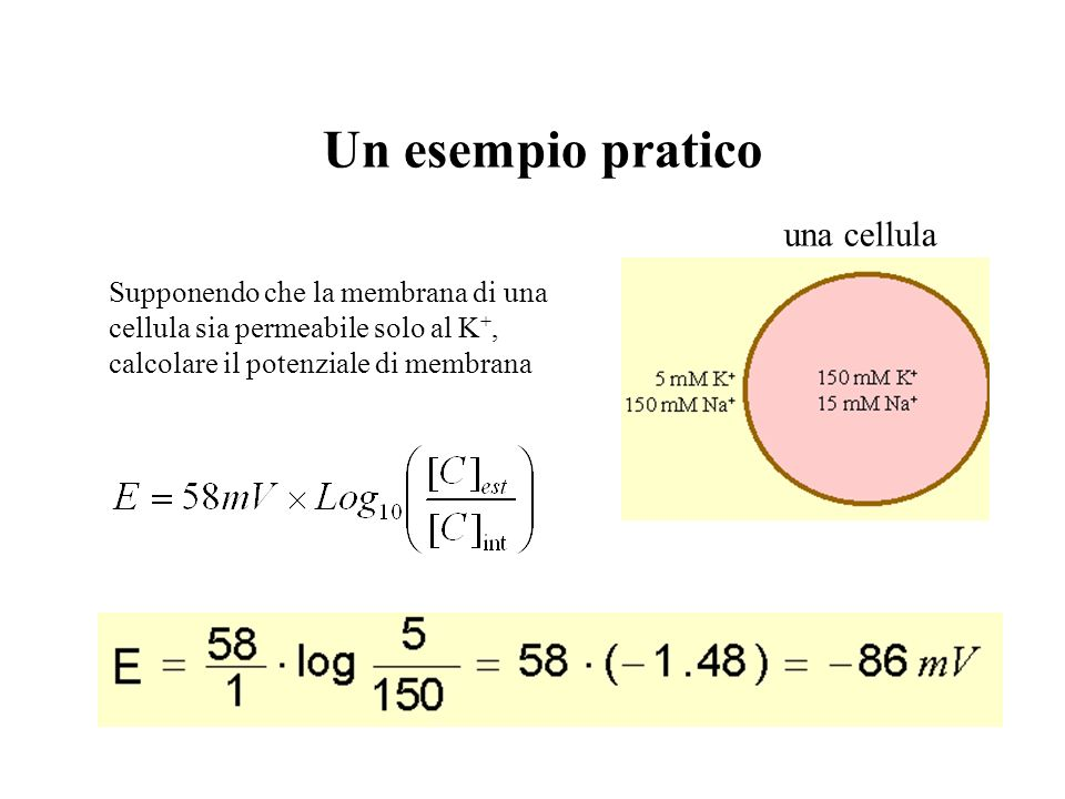 Un esempio pratico una cellula