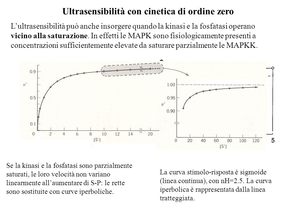 Ultrasensibilità con cinetica di ordine zero
