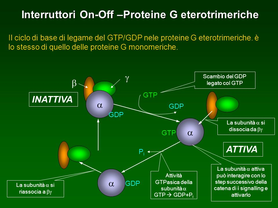 Interruttori On-Off –Proteine G eterotrimeriche