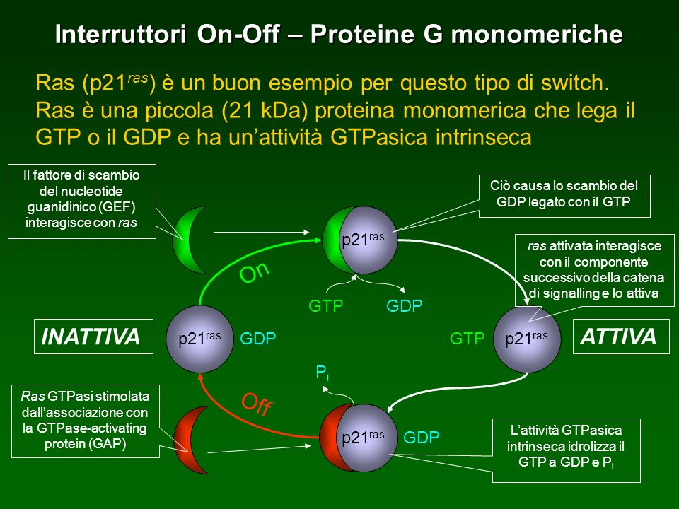 Interruttori On-Off – Proteine G monomeriche
