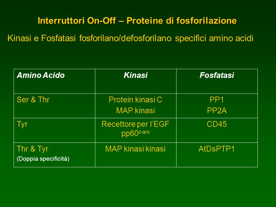 Interruttori On-Off – Proteine di fosforilazione
