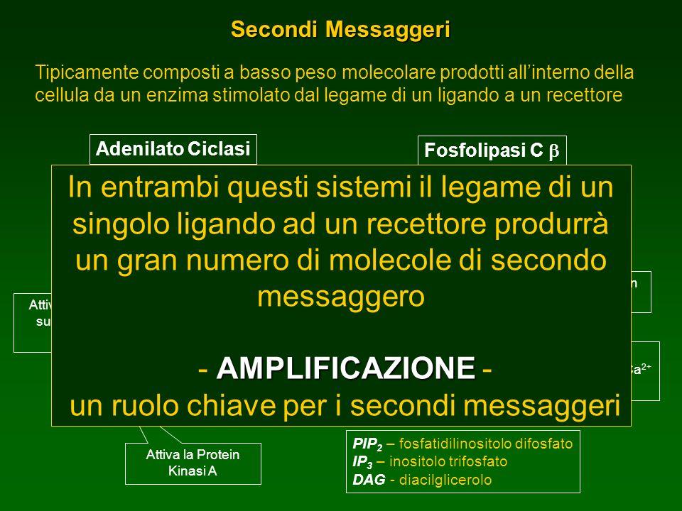 un ruolo chiave per i secondi messaggeri