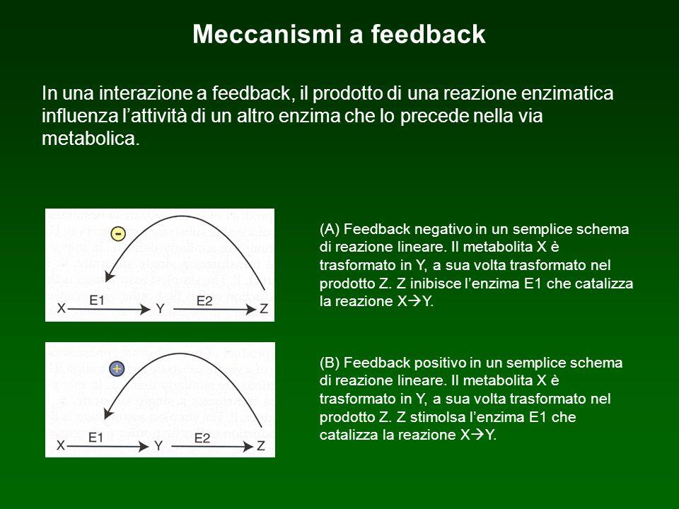 Meccanismi a feedback