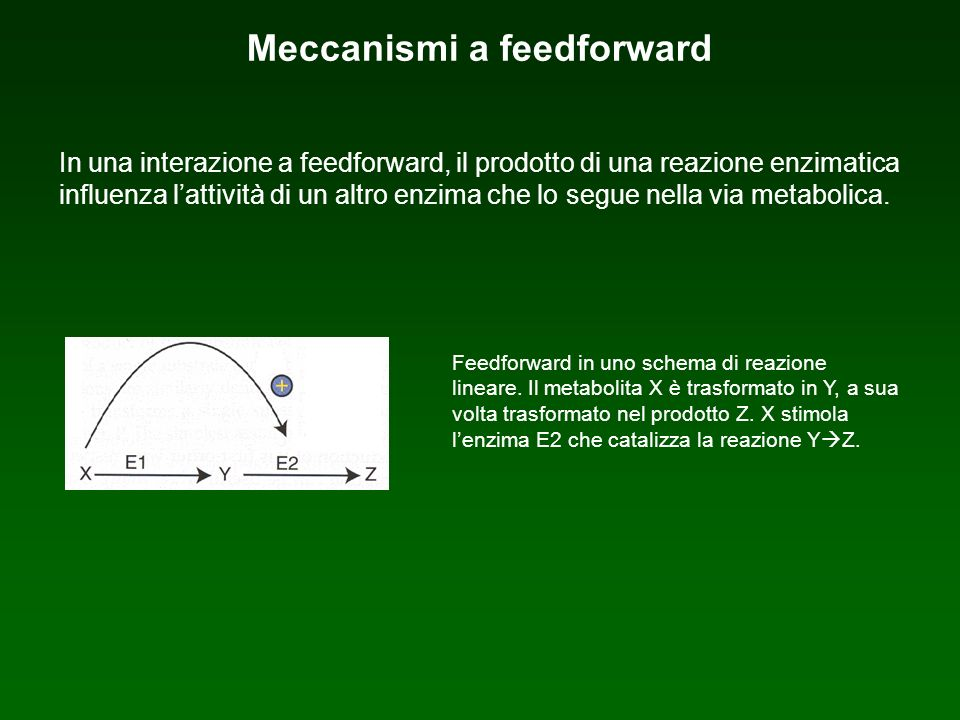Meccanismi a feedforward