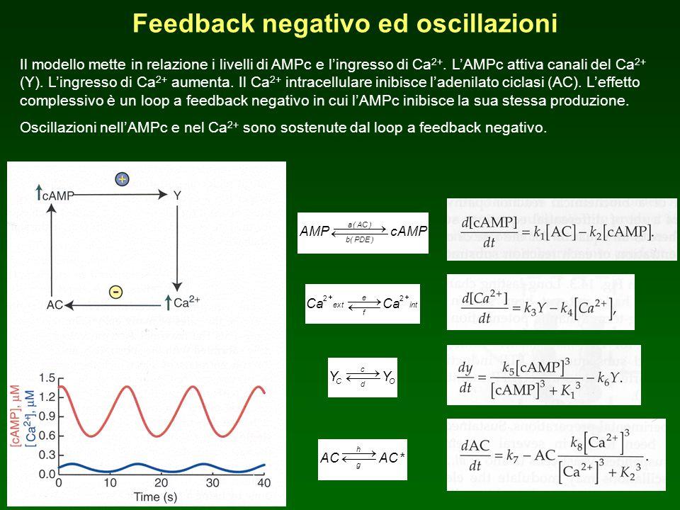Feedback negativo ed oscillazioni