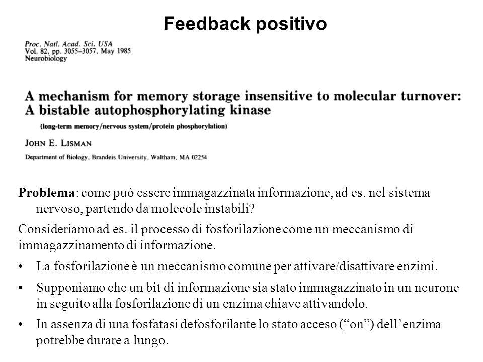 Feedback positivo Problema: come può essere immagazzinata informazione, ad es. nel sistema nervoso, partendo da molecole instabili