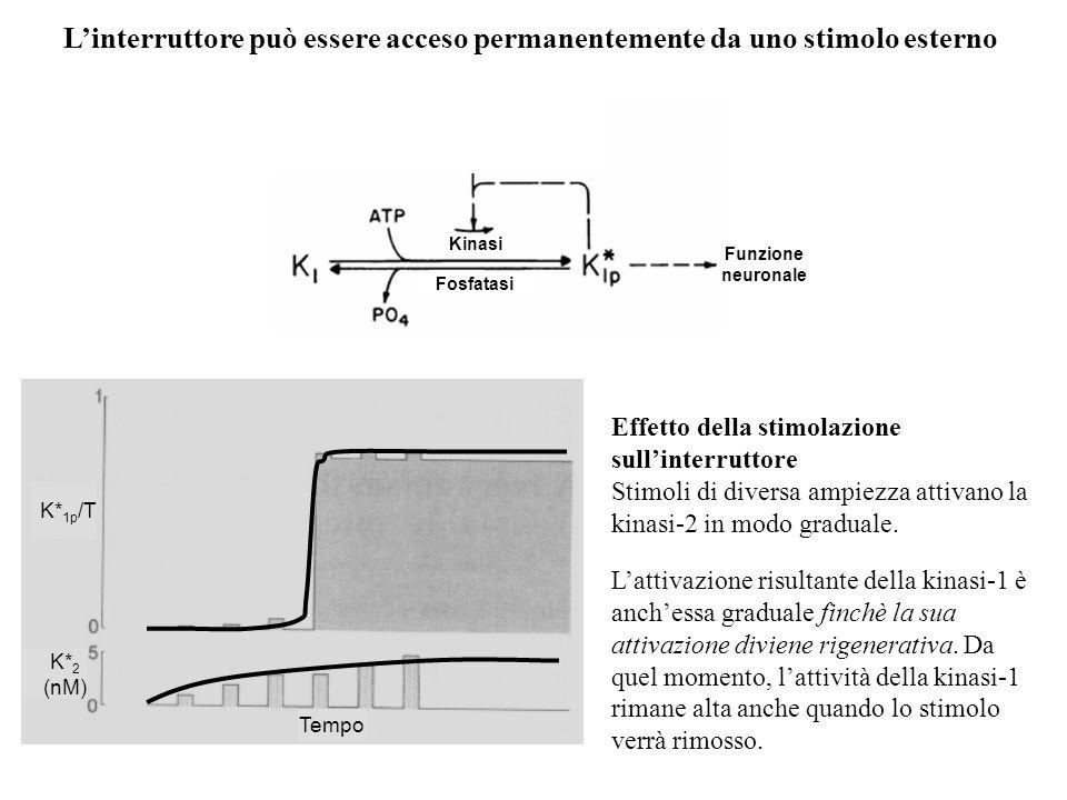 L'interruttore può essere acceso permanentemente da uno stimolo esterno