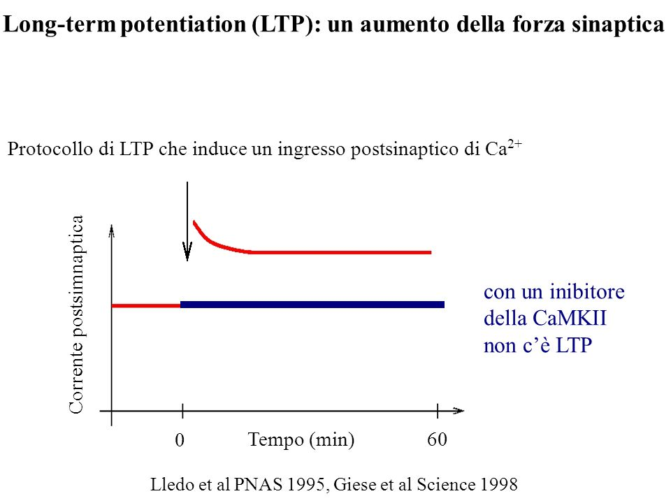 Long-term potentiation (LTP): un aumento della forza sinaptica
