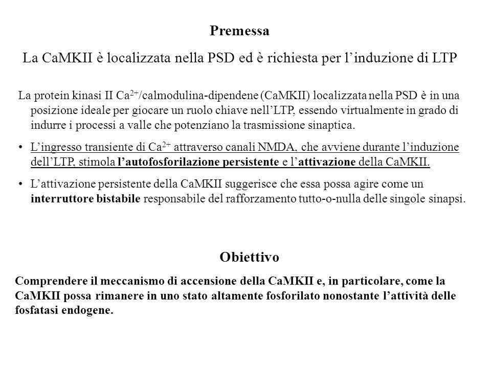 Premessa La CaMKII è localizzata nella PSD ed è richiesta per l'induzione di LTP.