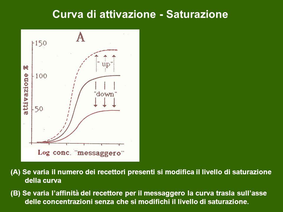 Curva di attivazione - Saturazione