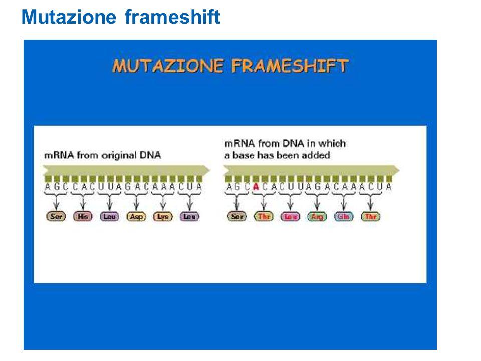 Mutazione frameshift