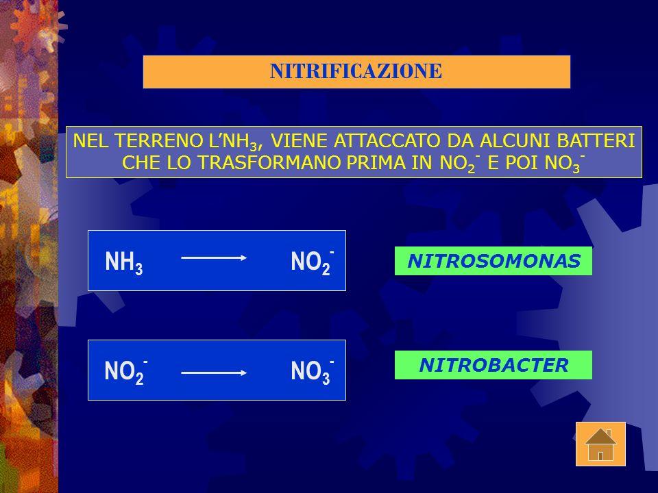 NH3 NO2- NO2- NO3- NITRIFICAZIONE