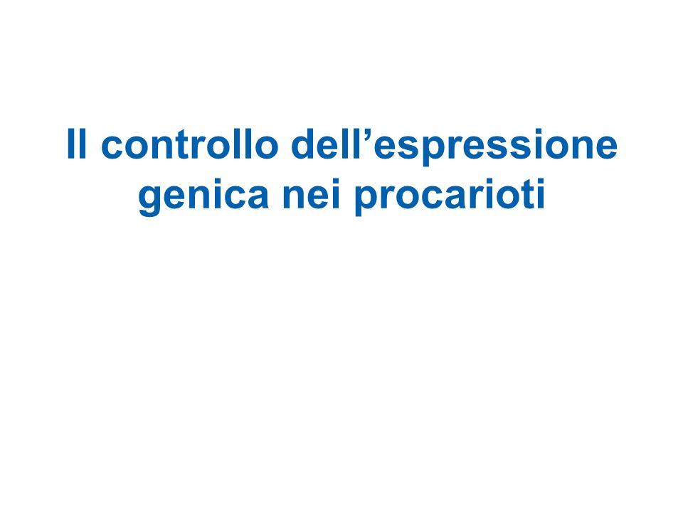 Il controllo dell'espressione genica nei procarioti