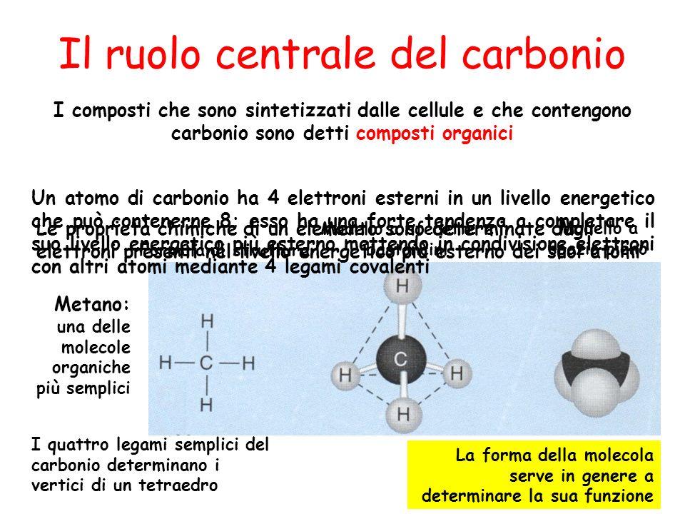 Il ruolo centrale del carbonio