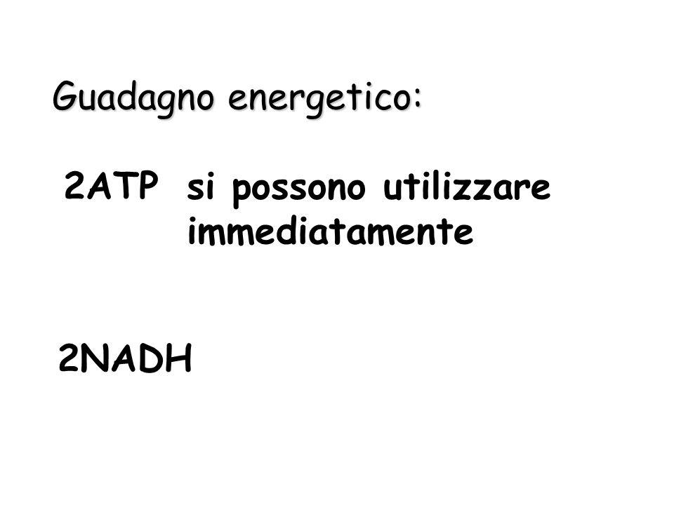 Guadagno energetico: 2ATP si possono utilizzare immediatamente