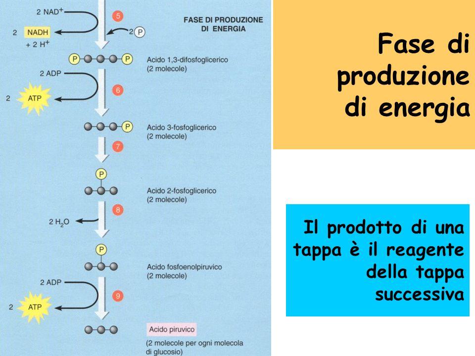 Fase di produzione di energia