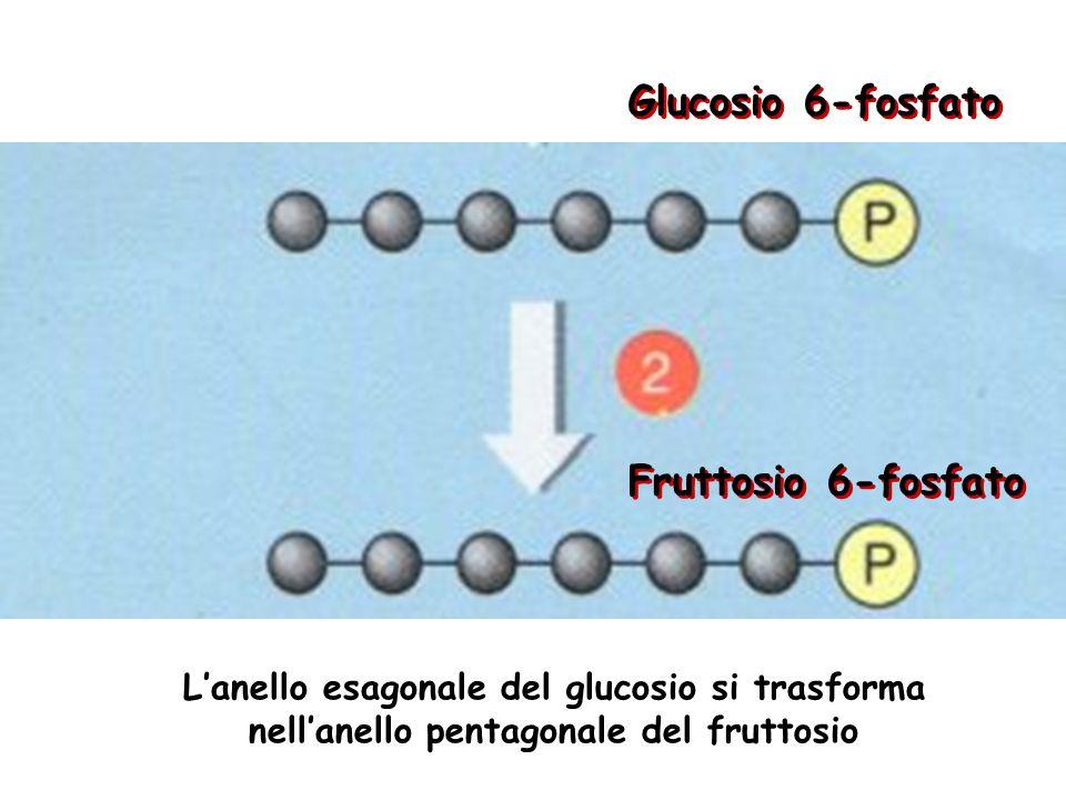 Glucosio 6-fosfato Fruttosio 6-fosfato