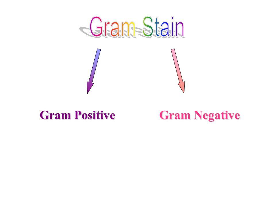 Gram Stain Gram Positive Gram Negative