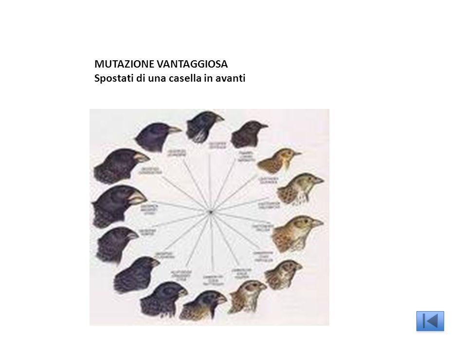 MUTAZIONE VANTAGGIOSA