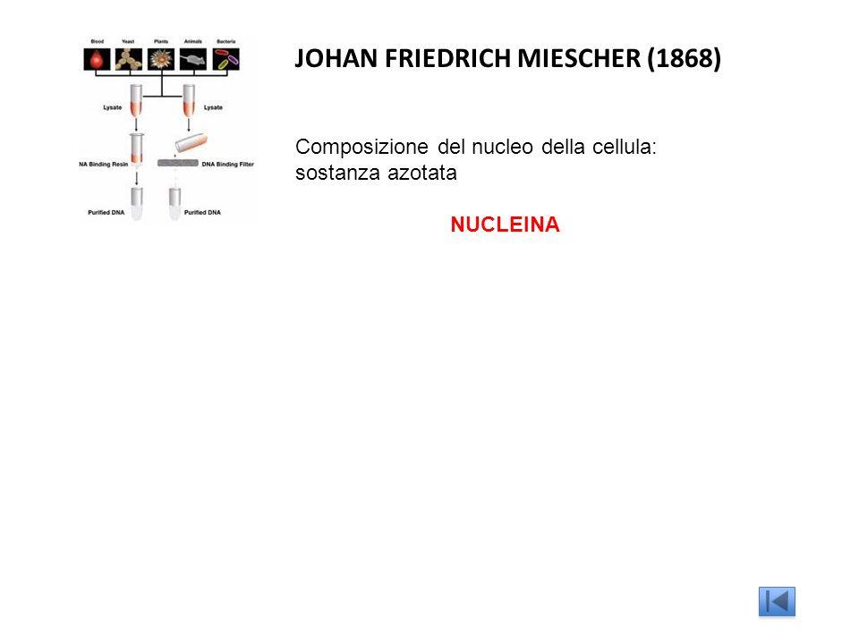 JOHAN FRIEDRICH MIESCHER (1868)