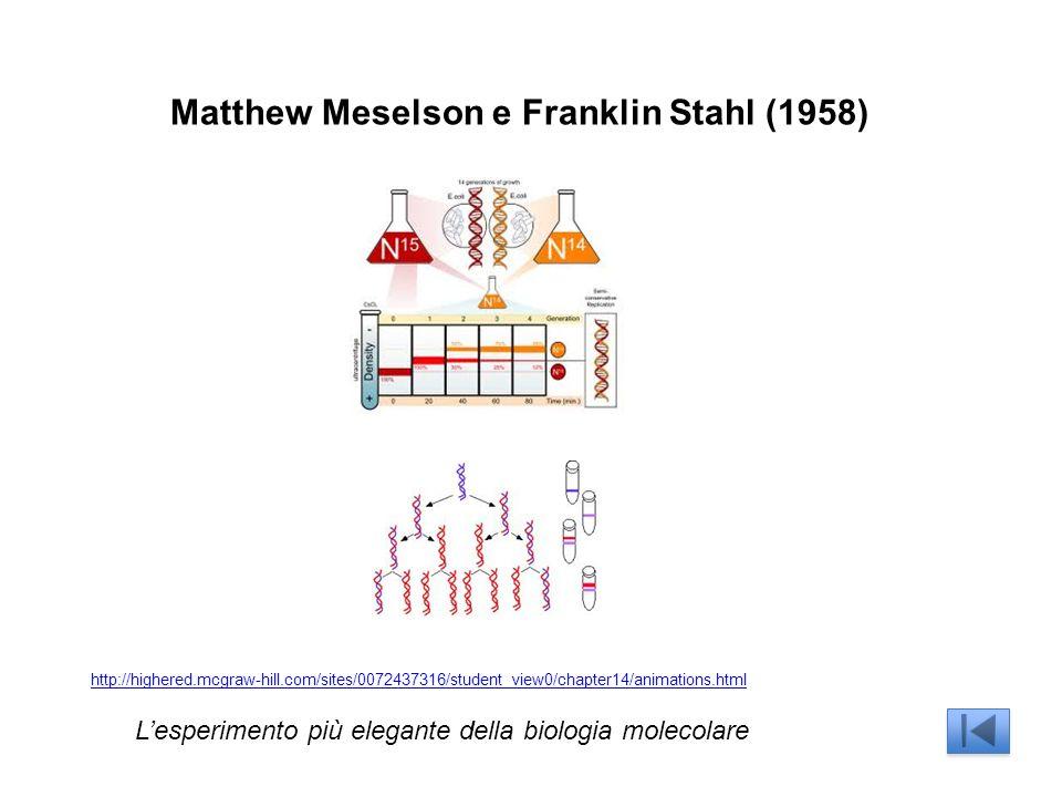 Matthew Meselson e Franklin Stahl (1958)