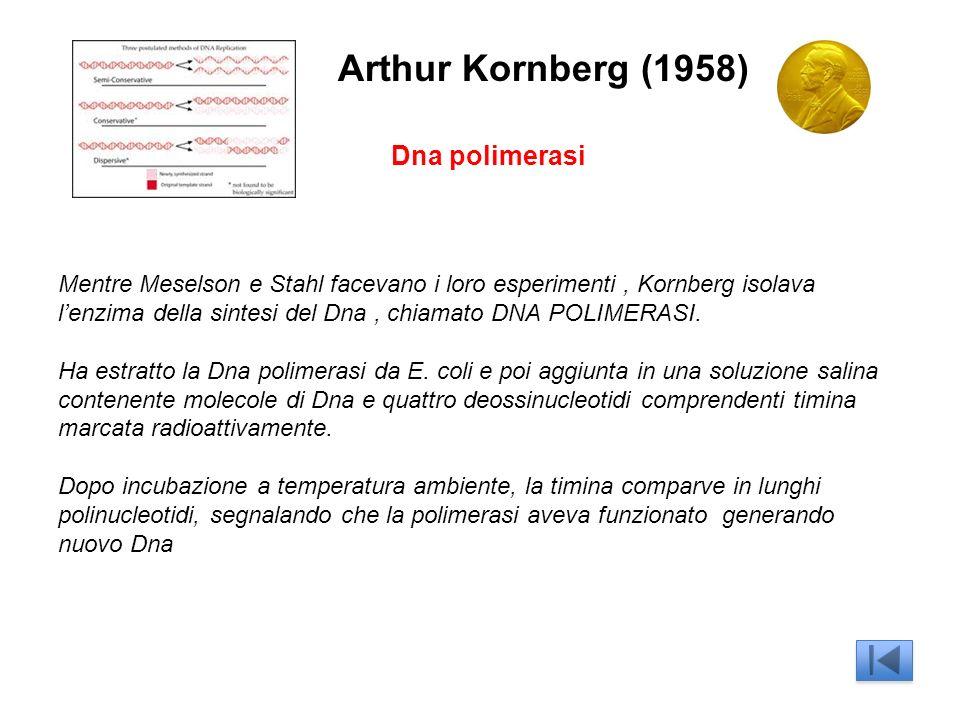 Arthur Kornberg (1958) Dna polimerasi