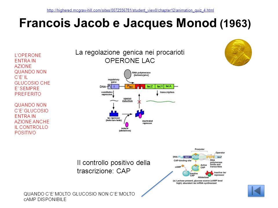 La regolazione genica nei procarioti