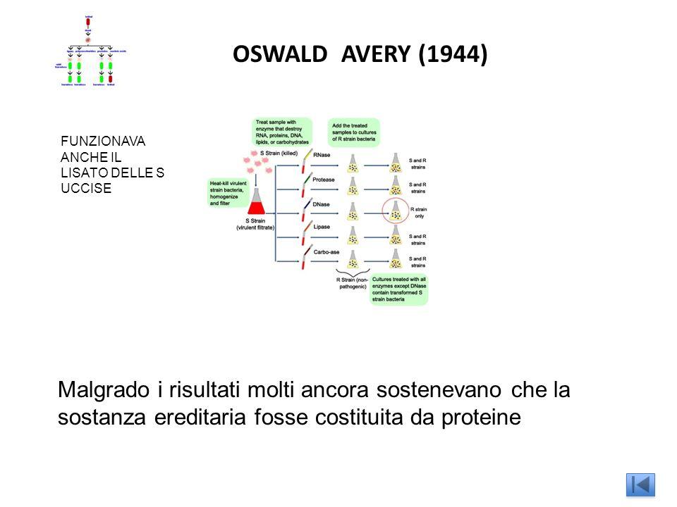 OSWALD AVERY (1944) FUNZIONAVA ANCHE IL LISATO DELLE S UCCISE.