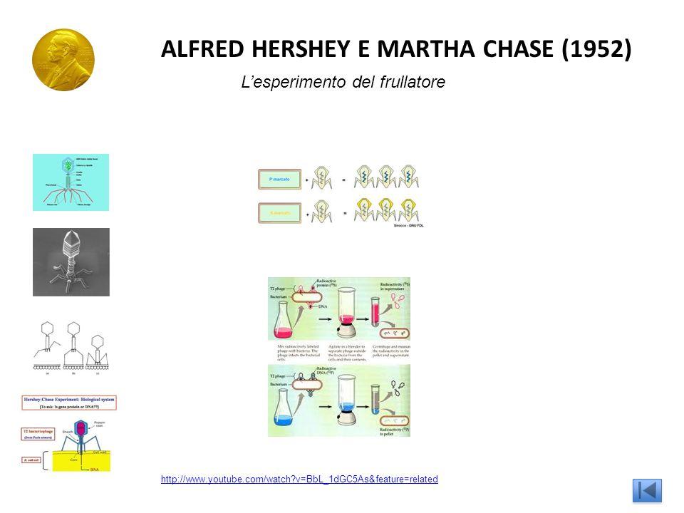 ALFRED HERSHEY E MARTHA CHASE (1952)