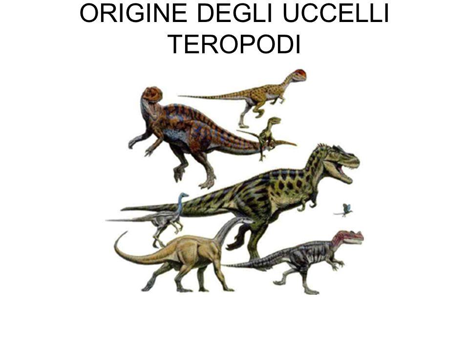 ORIGINE DEGLI UCCELLI TEROPODI