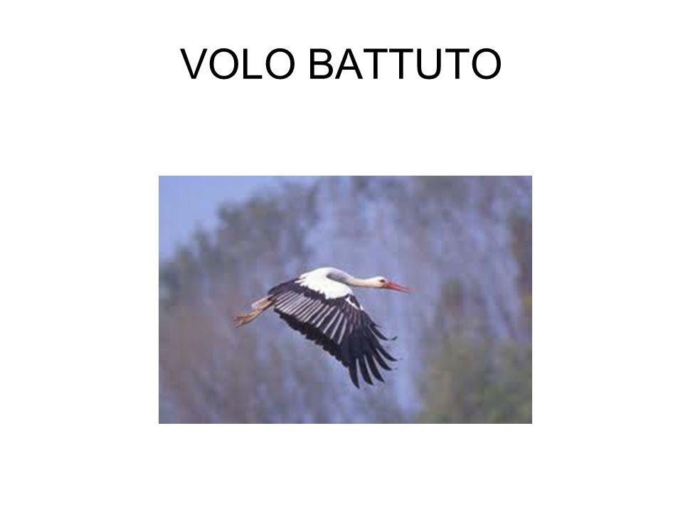 VOLO BATTUTO